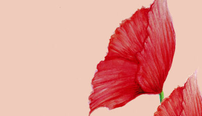 Red flower illustration on peach background